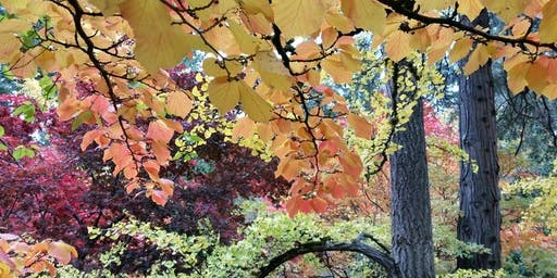 Autumn Forest Bathing Immersion Series at Lithia Park