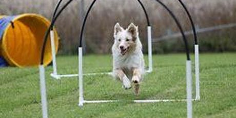 Hoopers Low Impact Agility Workshop - Off lead fun and tasty treat training tickets