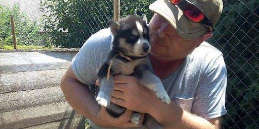 pour adotion Jolie Petit Siberian Husky gratuit