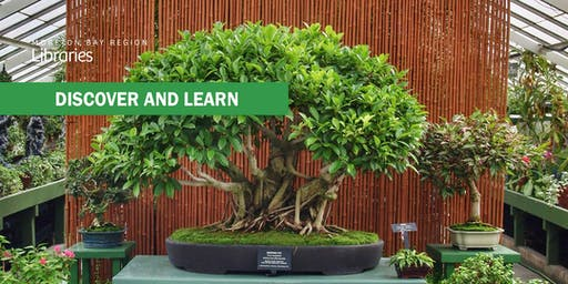 Australian Native Bonsai - Bribie Island Library