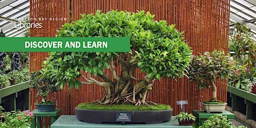 Australian Native Bonsai - Bribie Island Library