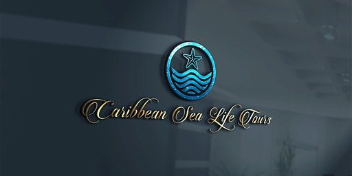 Caribbean Sea Life Snorkeling and Scuba Tours for Beginners
