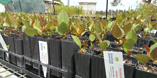 Greening Australia Community Propagation