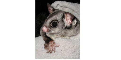 Trott Park | Native Australian  Animals