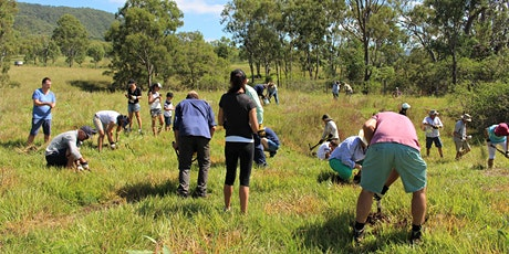 Tree Planting for wildlife tickets