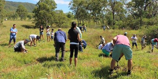 Tree Planting for wildlife