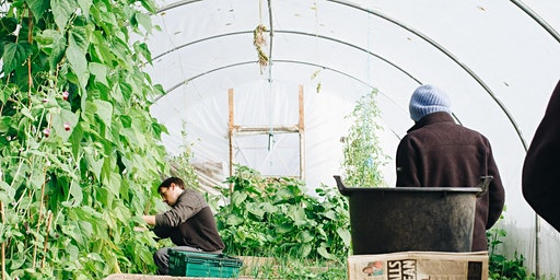Volunteer Walkaround: Discover opportunities on St Ann's Allotments