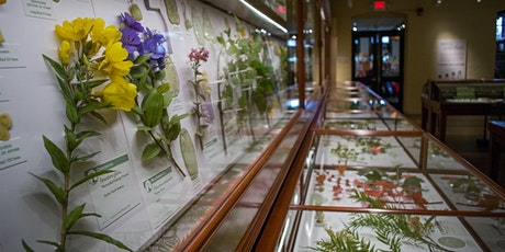 Impossibly Life-Like: A Talk on the Blaschka Glass Flower Collection tickets