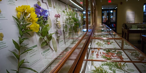 Impossibly Life-Like: A Talk on the Blaschka Glass Flower Collection