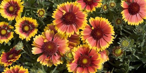 Transplanted Gardener (New to Florida Gardening?)