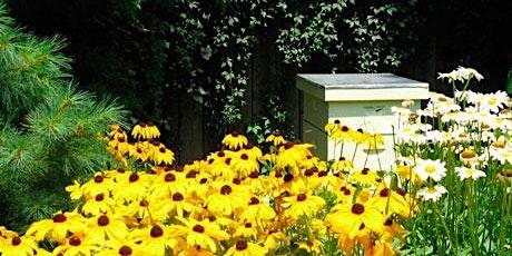 Advanced Backyard Bee Keeping