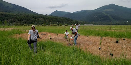 Idaho Conservation League — Bonners Ferry Tree Planting Event
