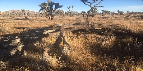 Studying the Impacts of Climate Change in Joshua Tree National Park tickets