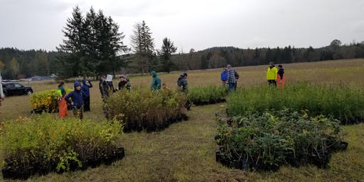 Powell Creek Planting  - 11/2