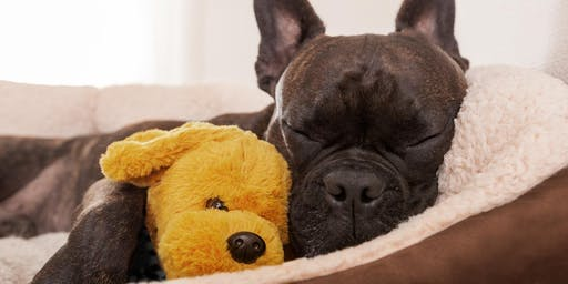 Winter Workshop for Pets: Home Remedies for Tummy Troubles