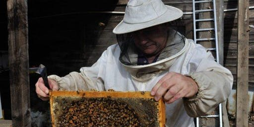 Basic Beekeeping (Adults 16+) (Woden Library)