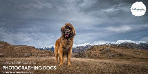A Beginners guide to photographing dogs with Craig Turner-Bullock