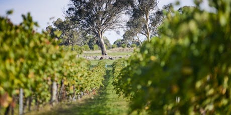 Shaw Wines Vineyard Experience tickets