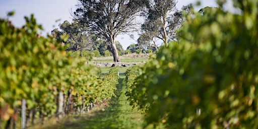 Shaw Wines Vineyard Experience