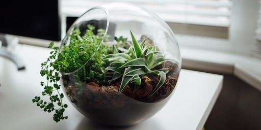 Succulent Terrarium Workshop - Free
