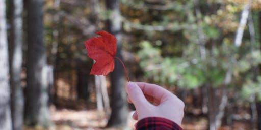 Fall Sabbath Hike (Cedar Haven)