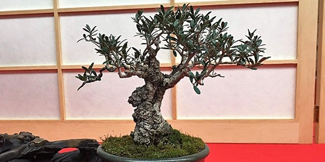 2020 Texas Bonsai Convention tickets
