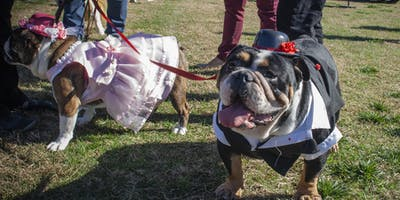 The 2nd Annual Santa Anita Park Bulldog Derby 2020