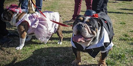The 2nd Annual Santa Anita Park Bulldog Derby 2020 tickets