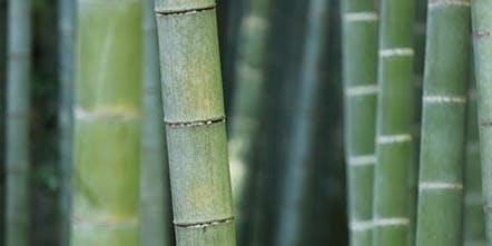 La coltivazione del bambù: opportunità per il mondo agricolo