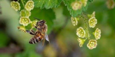 Hommes et abeilles : une cohabitation nécessaire et exigeante