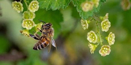 Hommes et abeilles : une cohabitation nécessaire et exigeante billets