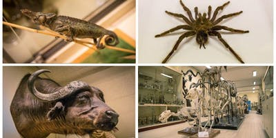Viste de la Galerie de Zoologie