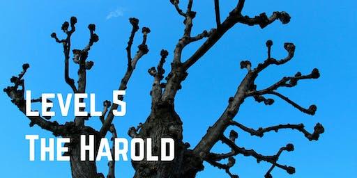 Level 5: The Harold