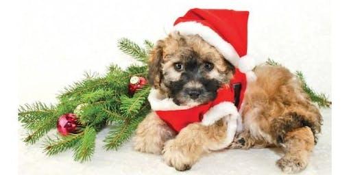 Santa Paws Photo Shoot for Pets
