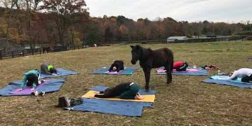 Fall Yoga With the Horses