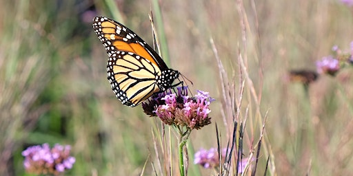 If We Can Save Our Butterflies, We Can Save Ourselves