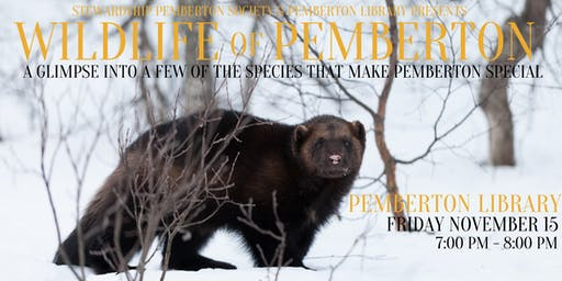 Wildlife of Pemberton