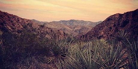 Desert Flora - Ecology Hike & Tea Journey. tickets