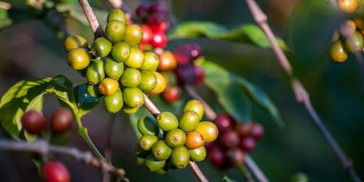 Origin Coffee Cupping Session