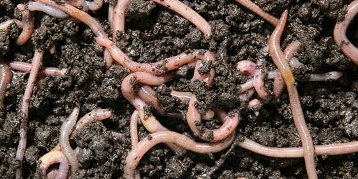Worm Farming Made Easy!