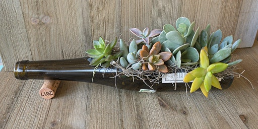 Recycled wine bottle succulent gardens