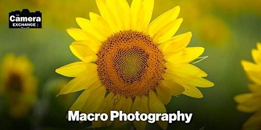 Intro To Macro Photography