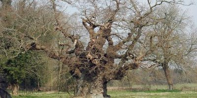 Winter Tree Identification course