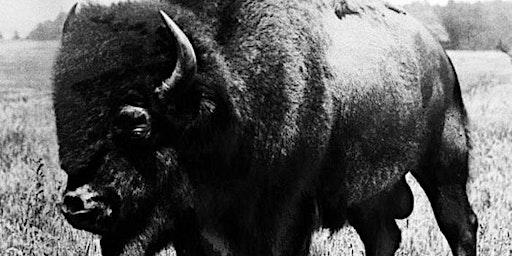 Whiskey & Buffalo Dinner