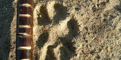 Woodlife Tracking Fundamentals Day