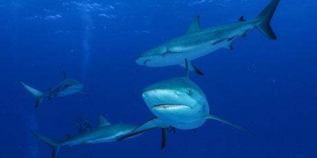 «Der Hai - mehr als nur Zähne und Killerinstinkt» von Ornella Weideli Tickets