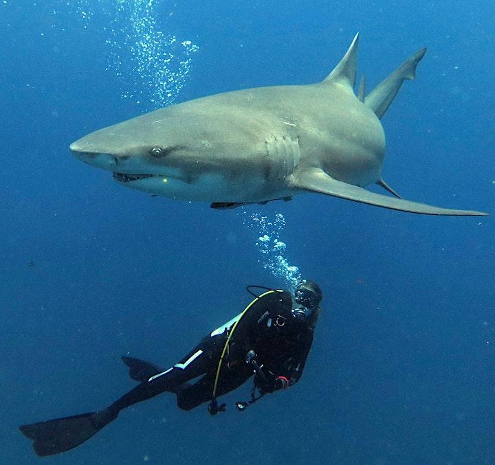 «Der Hai - mehr als nur Zähne und Killerinstinkt» von Ornella Weideli: Bild