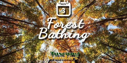 Forest Bathing nella faggete dell'Acquerino