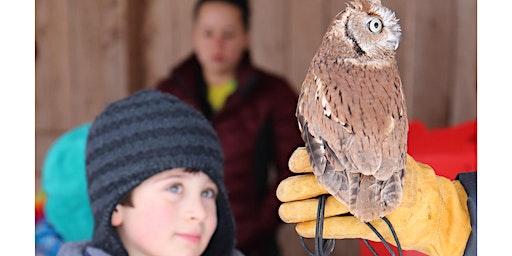 Owl Pellet Detectives