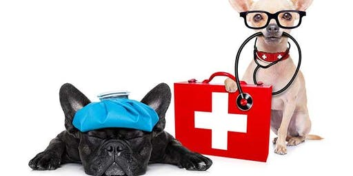 Dog First Aid Training
